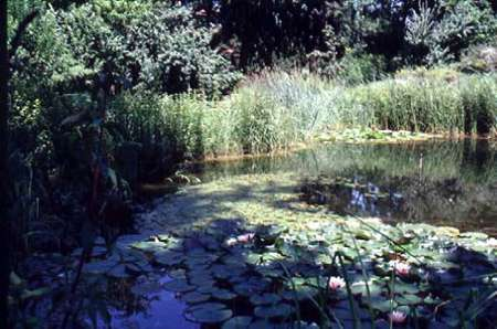 L 39 orto botanico di bologna for Stagno artificiale